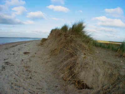 Primary succession and coastal sand dunes.